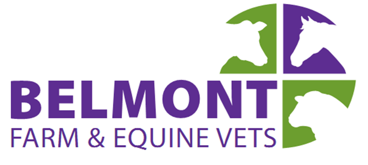 Belmont Farm and Equine Vets